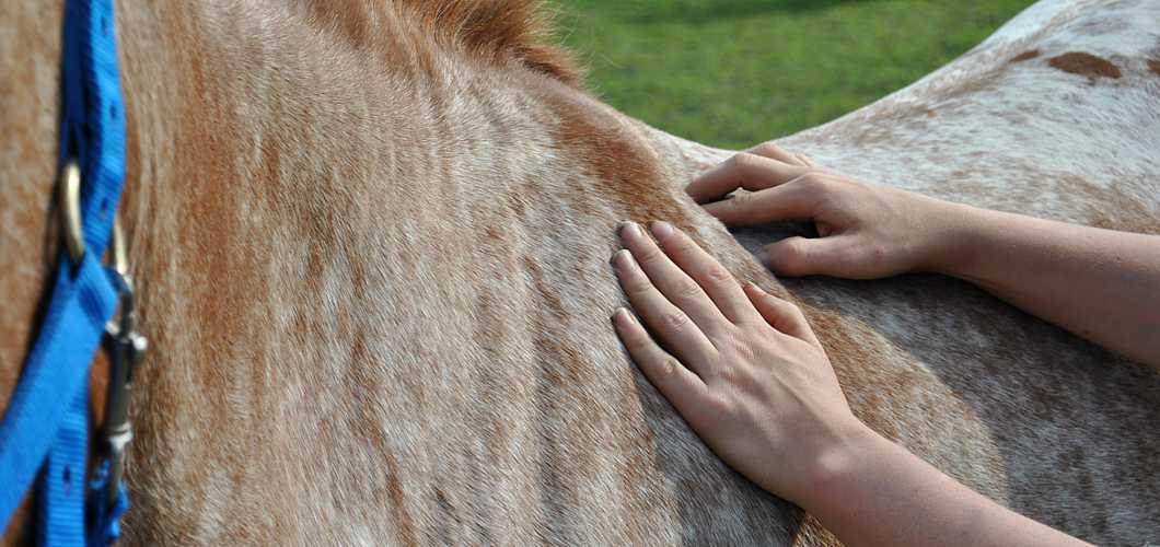 Anleitung zur Pferdemassage